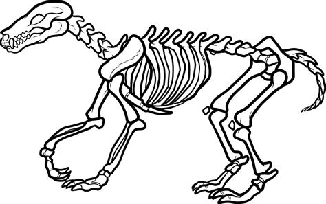 Fossils Coloring Pages fossils coloring pages az coloring pages