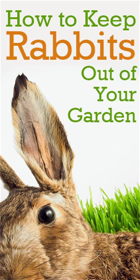How To Keep Rabbits Out Of Your Backyard how to keep rabbits out of your garden rabbit resistant plants