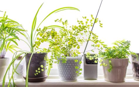 small house plants 10 low light houseplants to brighten your tiny apartment