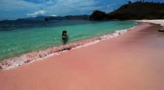 beaches with pink sand 03d 02n komodo island tour bernard bali advisor