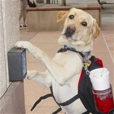 how to service dogs document moved