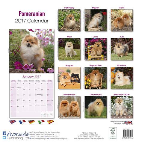 pomeranian calendar 2017 pomeranian calendar 2017 10060 17 pomeranian breeds