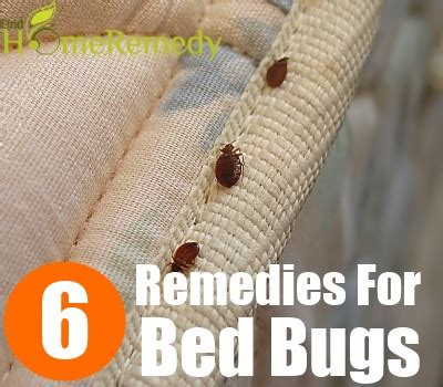 do bed bugs live in clothes 6 home remedies for removing bed bugs natural treatments
