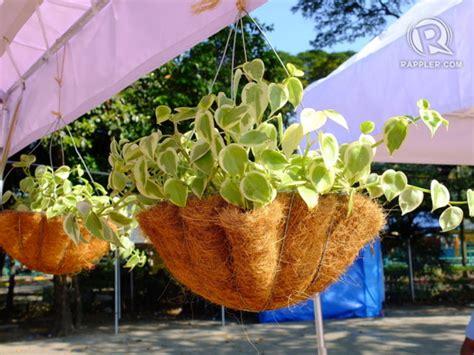 Coconut Husk Planter Liners by 6 Creative Ways To Go Zero Waste