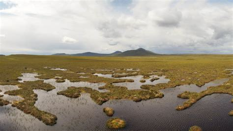 Peatland Conservation And Restoration Wetlands