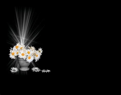 imagenes de rosas iluminadas lapida flores iluminadas lapidas para nichos