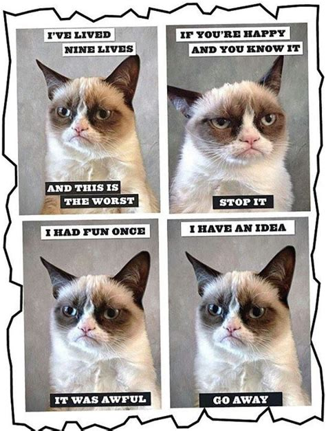 you re going grumpy history cheer up grumpy cat you re a million dollar megastar