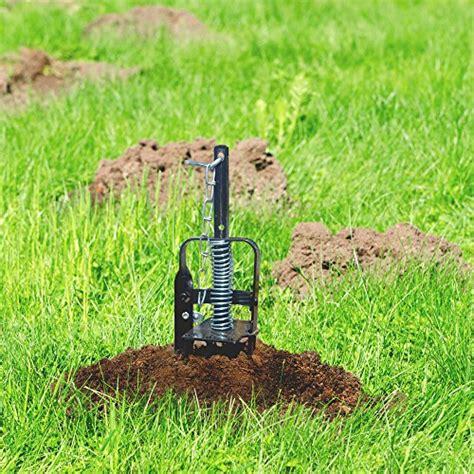 eliminare le talpe in giardino victor trappola talpe mole prezzo ioandroid