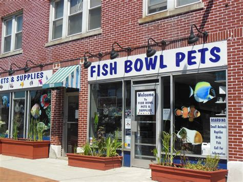 pet stores in ma that sell puppies meet tony your springdale pet store owner parkbench