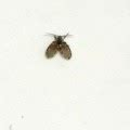 small black flying bugs in bathroom how to get rid of mice outside your home tiny little
