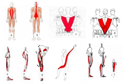 cadenas musculares philippe cignion pdf crossfit las rozas 187 la importancia del estiramiento de