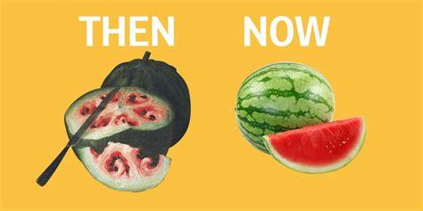 vegetables vs fruits fruits and vegetables and their ancestors business insider