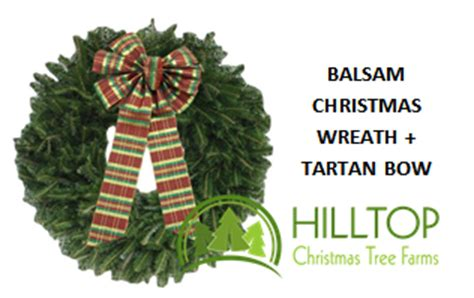 save on trees at hilltop christmas tree farms emily s