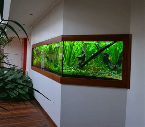 creation et installation d aquariums sur mesures aquarium location services