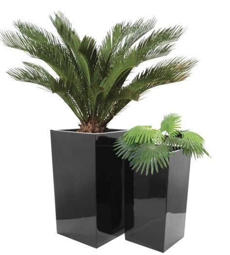 pflanzen groß pflanzk 252 bel pflanzen bestseller shop