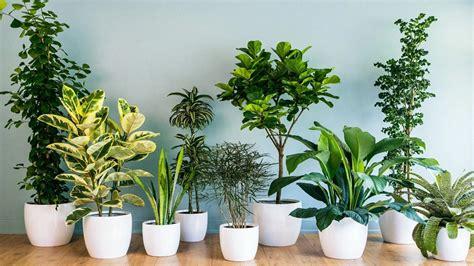 indoor plants nyc best indoor plants nyc rose red u0026 lavender