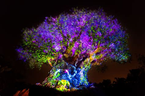 disney s animal kingdom theme park orlando florida