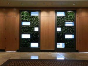 ultimate guide  living green walls ambius