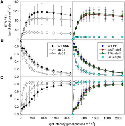 linear induction electron atp synthase repression in tobacco restricts photosynthetic electron transport co2 assimilation