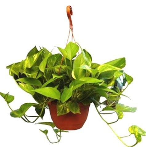 Indoor Plant Guide 5 Beginner 8 Basic Tips For Beginning Gardening House Plants For You House Plants For You