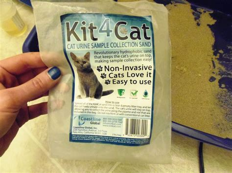 how can a urine specimen sit at room temperature need a urine sle from your cat kit4cat review