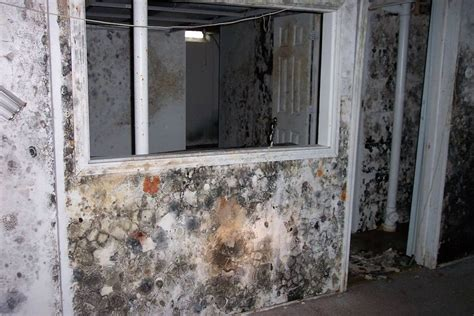 how to detect household mould