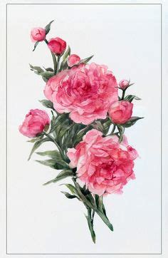 watercolor pink peonies by natalia tyulkina on creative