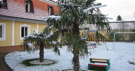 winterharte palme am pool winterharte palmen exotische