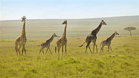 Safitri Syari kenya safaris safaris in kenya kuoni