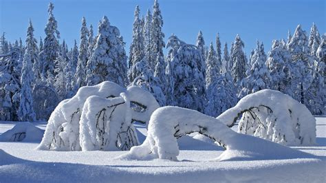 google images winter scenes amazing snow full screen hd desktop wallpapers background