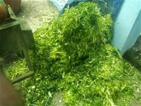 Mesin Pencacah Rumput Untuk Pakan Sapi mesin sakti mesin pencacah jerami untuk pakan ternak
