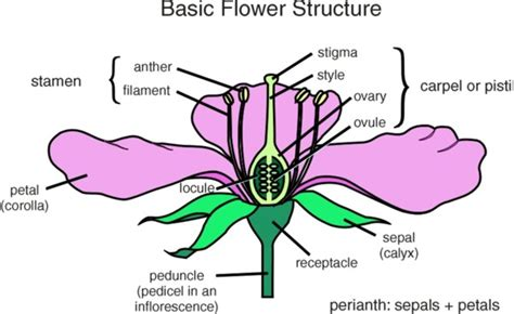 flower part diagram parts of a flower diagram