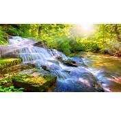 Running Brook Nature 4K Wallpaper  Free