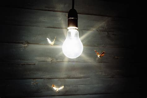 Are Spiders Attracted To Light by Why Are Bugs Attracted To Lights