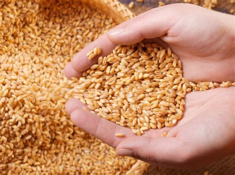 whole grains per day adults may need targeting to increase whole grain intake