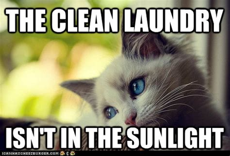 Cat Problems Meme - first world cat problems do something about this hoomin