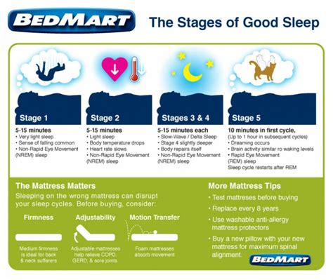 Five Stages Of Sleep Essay by Stages Of Sleep Visual Ly