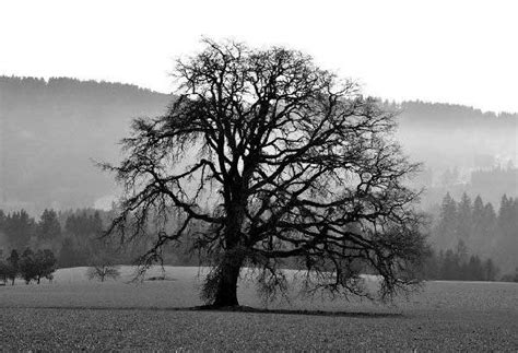 Landscape Photography Artist Statement Photography Artist Statement Landscape