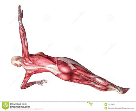 ab muscles diagram 103 best images about workout on si joint