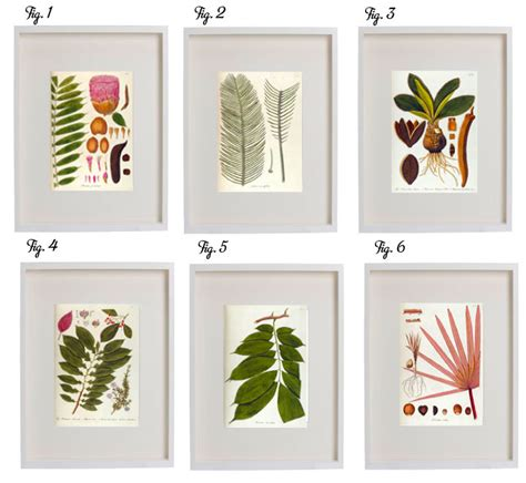 free download printable wall art free download botanical prints poppytalk