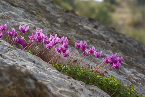 fiore autunnale fiori autunnali forum natura mediterraneo forum