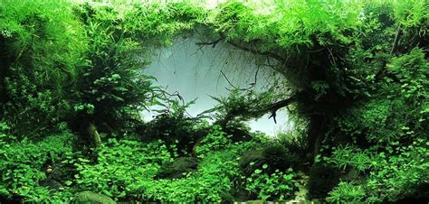 freshwater aquascaping ideas 17 best images about aquarium ideas and diy projects on