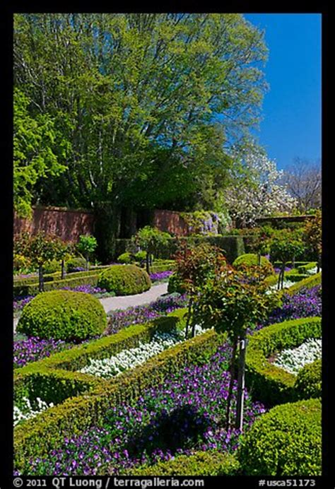 Picture Photo Hedges And Flowers Walled Garden Filoli Flower Gardens In California