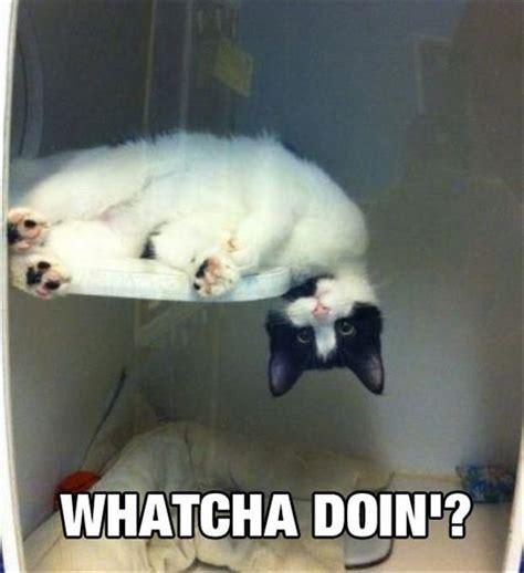 whatcha doin cat memes and comics