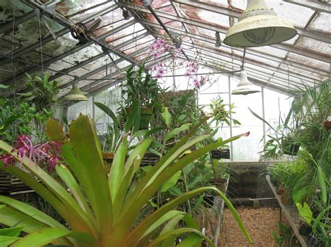 greenhouses in florida botany greenhouses 187 the botany major 187 of florida