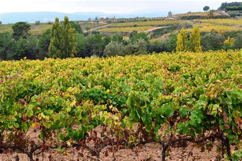 wineries to visit near barcelona