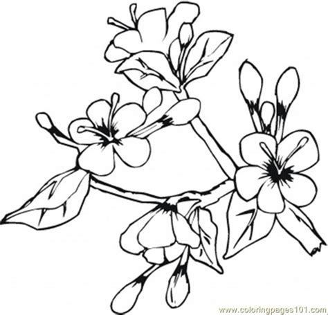 coloring pages of may flowers coloring pages flowers in may coloring page food fruits