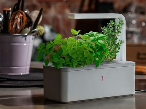 click and grow smart herb garden w l 3 refills basil smart herb garden by click grow by click grow