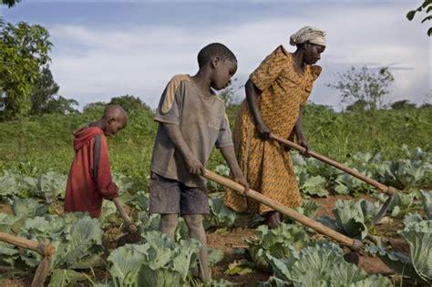 intensive subsistence farming near nuwara eliya central province