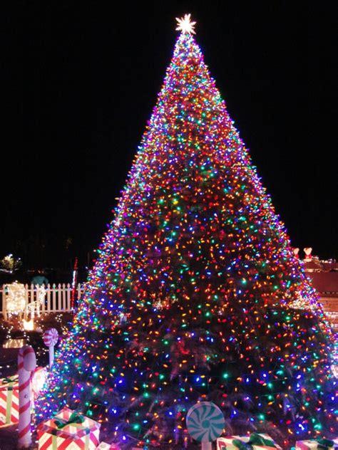 garten 2000 weihnachtsbaum weihnachtsbaumbeleuchtung eine interessante